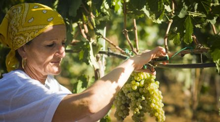 Come distinguere i vini naturali